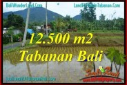 Magnificent PROPERTY 12,500 m2 LAND SALE IN TABANAN TJTB317
