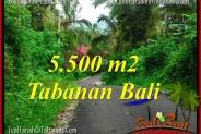 FOR SALE Affordable PROPERTY 5,500 m2 LAND IN Tabanan Penebel TJTB323
