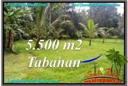 Tabanan Penebel BALI LAND FOR SALE TJTB295