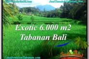 Affordable LAND SALE IN Tabanan Penebel BALI TJTB306