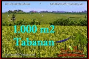 Affordable PROPERTY 1,000 m2 LAND FOR SALE IN Tabanan Selemadeg TJTB266