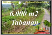 Magnificent 6,000 m2 LAND IN TABANAN FOR SALE TJTB349